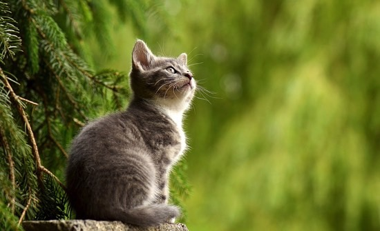 Can Bladder Stones Kill Cats – Interesting Facts and Possible Solutions