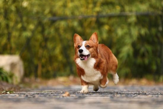 Prize Wheels Enhance Your Pet Adoption Drive