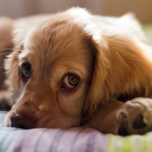 A Realistic Look at the Cost of Owning a Dog