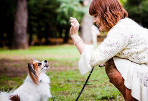 Are small dogs more trainable than large dogs?Are small dogs more trainable than large dogs?
